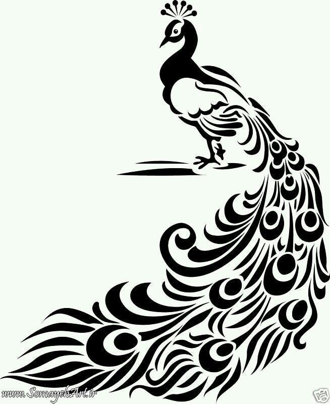 طرح های خام طاووس طرح های خام طاووس برای نقاشی