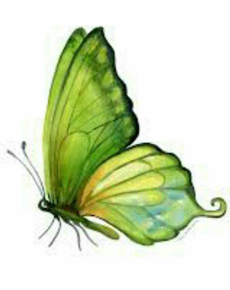 طرح پروانه برای نقاشی طرح پروانه برای نقاشی                                                  768x969