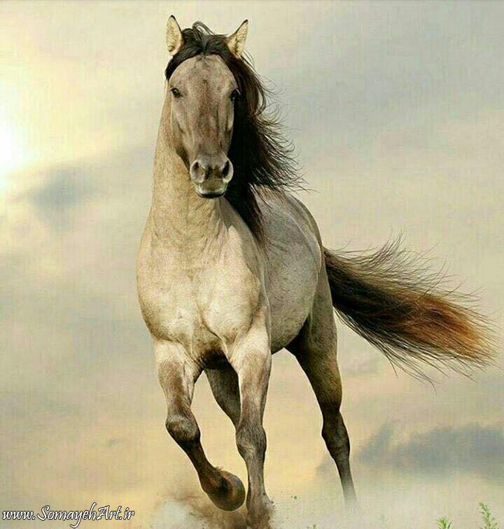 مدل نقاشی اسب سری 2 مدل نقاشی اسب سری 2