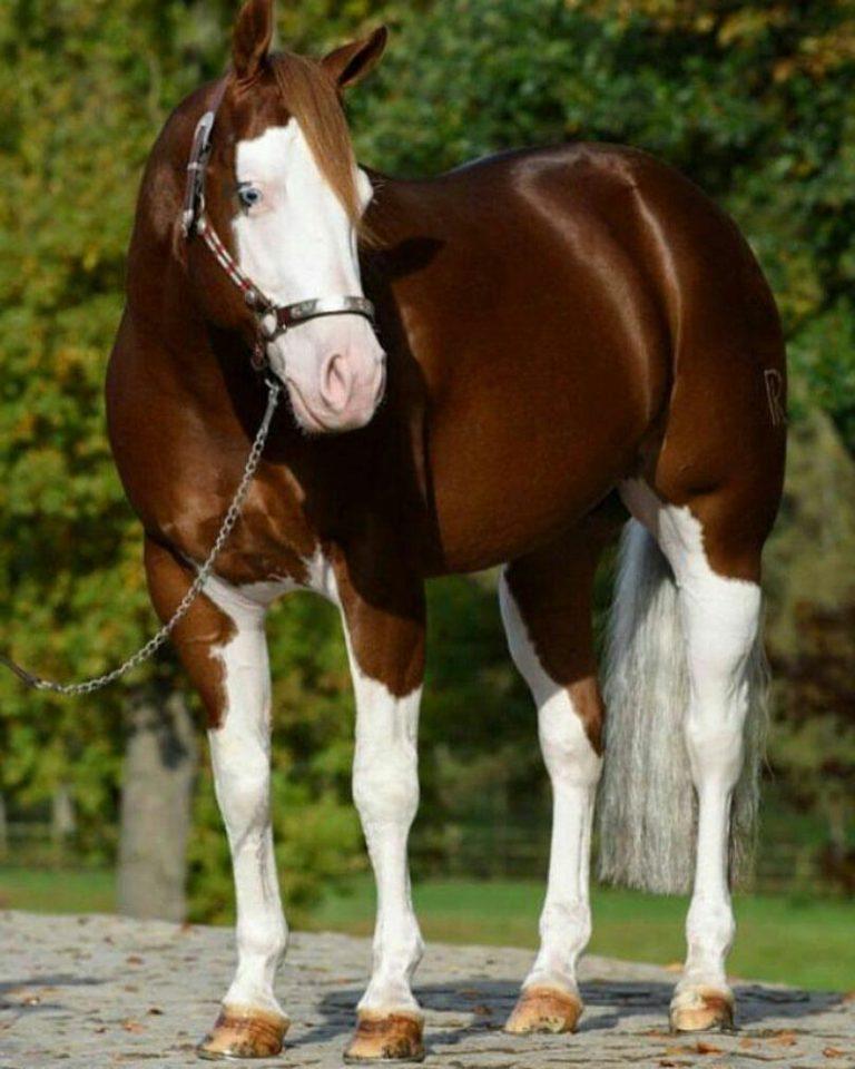 مدل نقاشی اسب مناسب برای نقاشی سیاه قلم و رنگ روغن مدل نقاشی اسب مناسب برای نقاشی سیاه قلم و رنگ روغن                          3 768x960