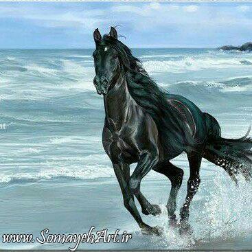 مدل نقاشی اسب مناسب برای نقاشی سیاه قلم و رنگ روغن مدل نقاشی اسب مناسب برای نقاشی سیاه قلم و رنگ روغن                          4