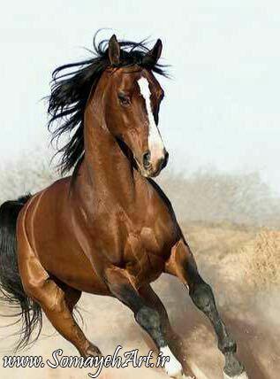 مدل نقاشی اسب مناسب برای نقاشی سیاه قلم و رنگ روغن مدل نقاشی اسب مناسب برای نقاشی سیاه قلم و رنگ روغن                          5