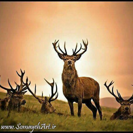 مجموعه مدل های نقاشی حیوانات وحشی مجموعه مدل های نقاشی حیوانات وحشی                                           7
