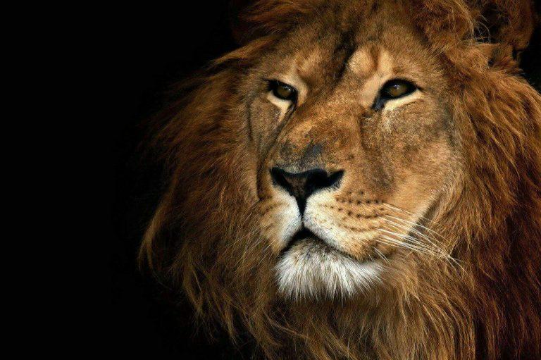 مجموعه مدل های نقاشی حیوانات وحشی مجموعه مدل های نقاشی حیوانات وحشی                                           8 768x511