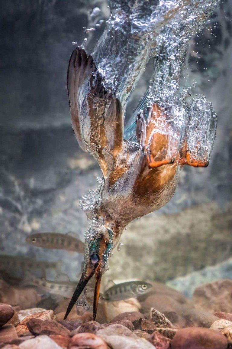 مدل نقاشی پرنده مدل نقاشی انواع پرنده مدل نقاشی انواع پرنده                                                   768x1154