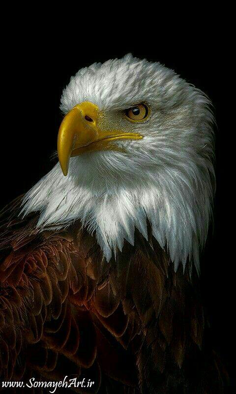 مدل نقاشی انواع پرنده مدل نقاشی انواع پرنده                                       2