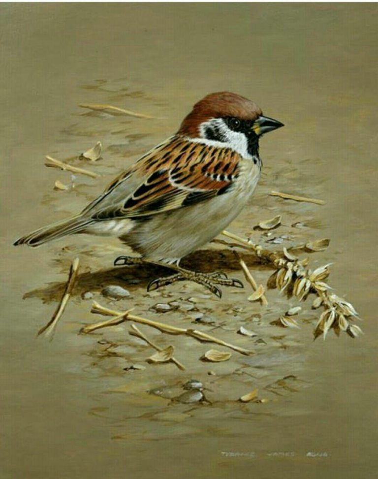 مدل نقاشی انواع پرنده مدل نقاشی انواع پرنده                                         2 768x973