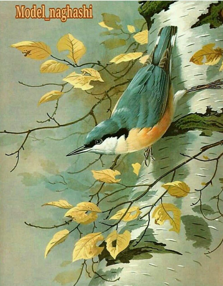 مدل نقاشی انواع پرنده مدل نقاشی انواع پرنده photo 2018 06 02 01 42 40 768x986