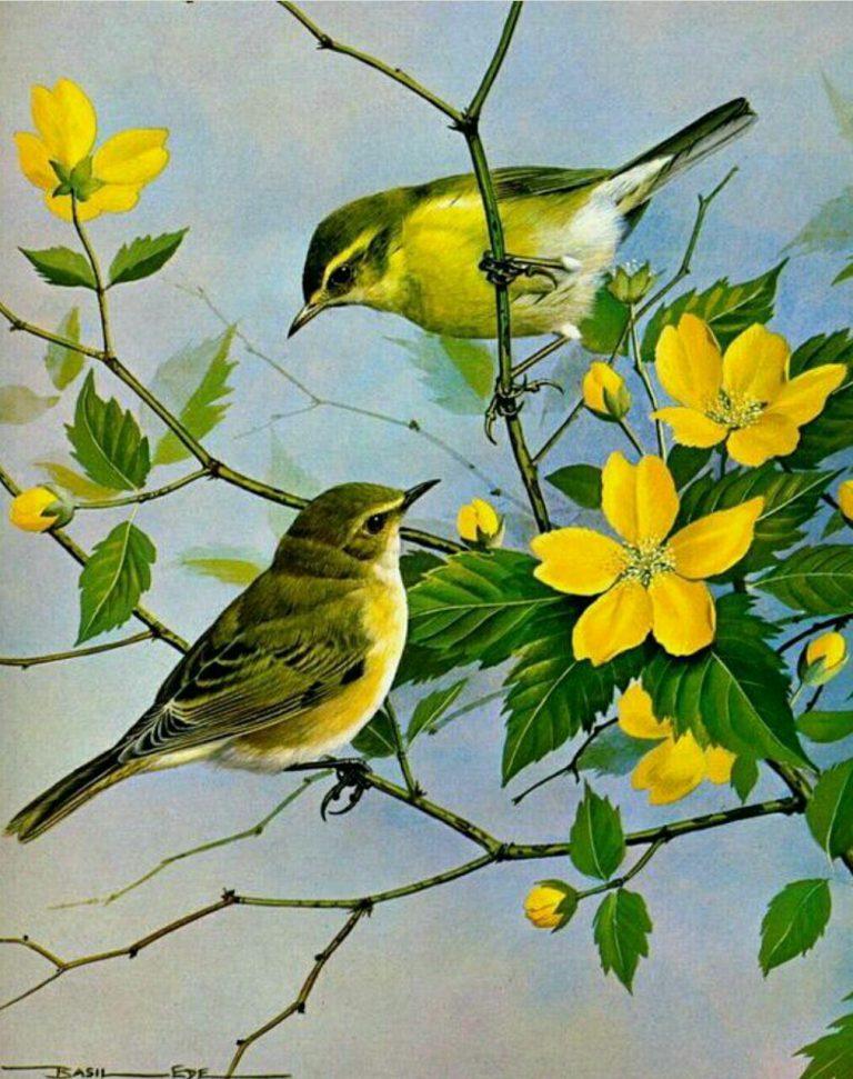 مدل نقاشی انواع پرنده مدل نقاشی انواع پرنده photo 2018 06 02 01 42 57 768x971