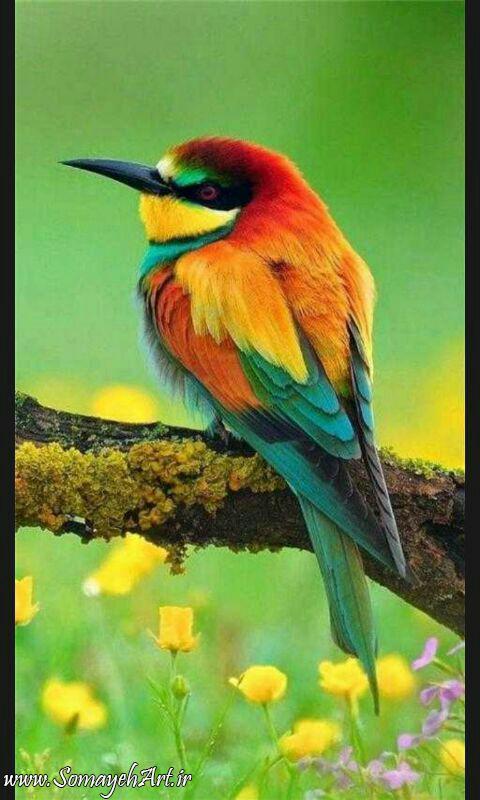 مدل نقاشی انواع پرنده مدل نقاشی انواع پرنده photo 2018 06 02 01 42 59