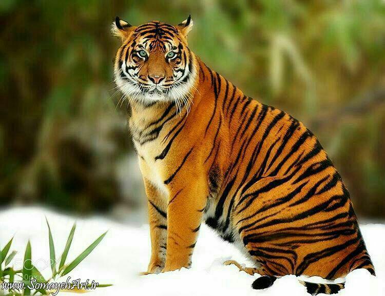 مجموعه مدل های نقاشی حیوانات وحشی مجموعه مدل های نقاشی حیوانات وحشی photo 2018 06 02 01 43 39