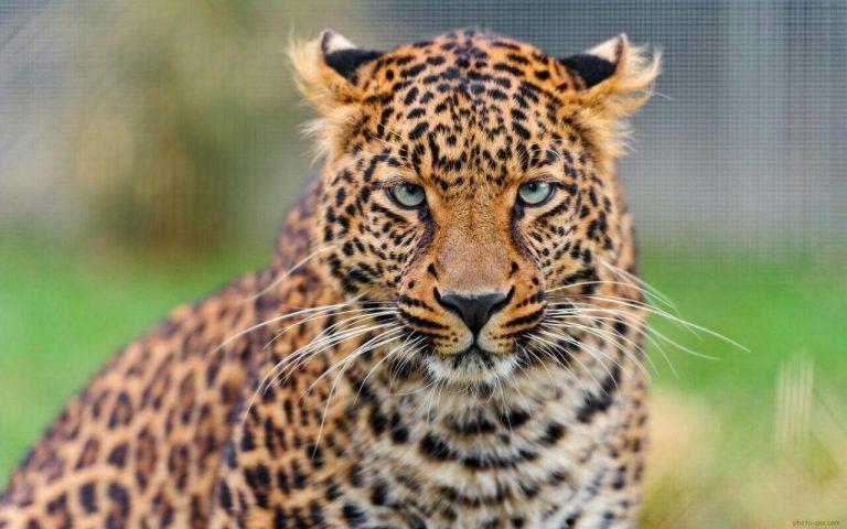 مجموعه مدل های نقاشی حیوانات وحشی مجموعه مدل های نقاشی حیوانات وحشی photo 2018 06 02 01 44 11 768x480
