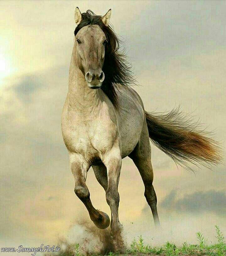 مدل نقاشی اسب مناسب برای نقاشی سیاه قلم و رنگ روغن مدل نقاشی اسب مناسب برای نقاشی سیاه قلم و رنگ روغن photo 2018 06 02 01 44 20
