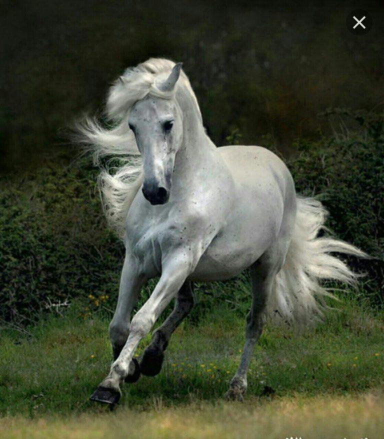 مدل نقاشی اسب مناسب برای نقاشی سیاه قلم و رنگ روغن مدل نقاشی اسب مناسب برای نقاشی سیاه قلم و رنگ روغن photo 2018 06 02 01 44 54 768x878
