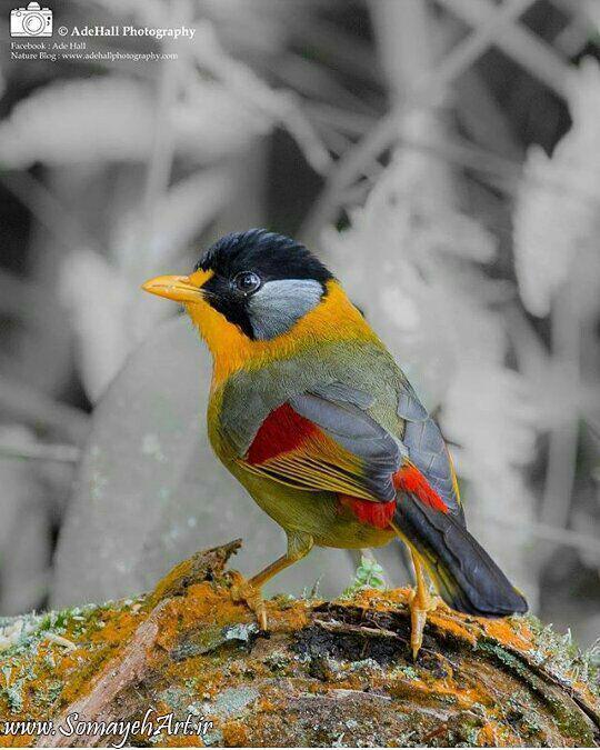 مدل نقاشی انواع پرنده مدل نقاشی انواع پرنده photo 2018 06 02 01 45 20