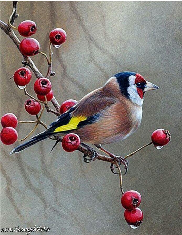 مدل نقاشی انواع پرنده مدل نقاشی انواع پرنده photo 2018 06 02 01 45 44