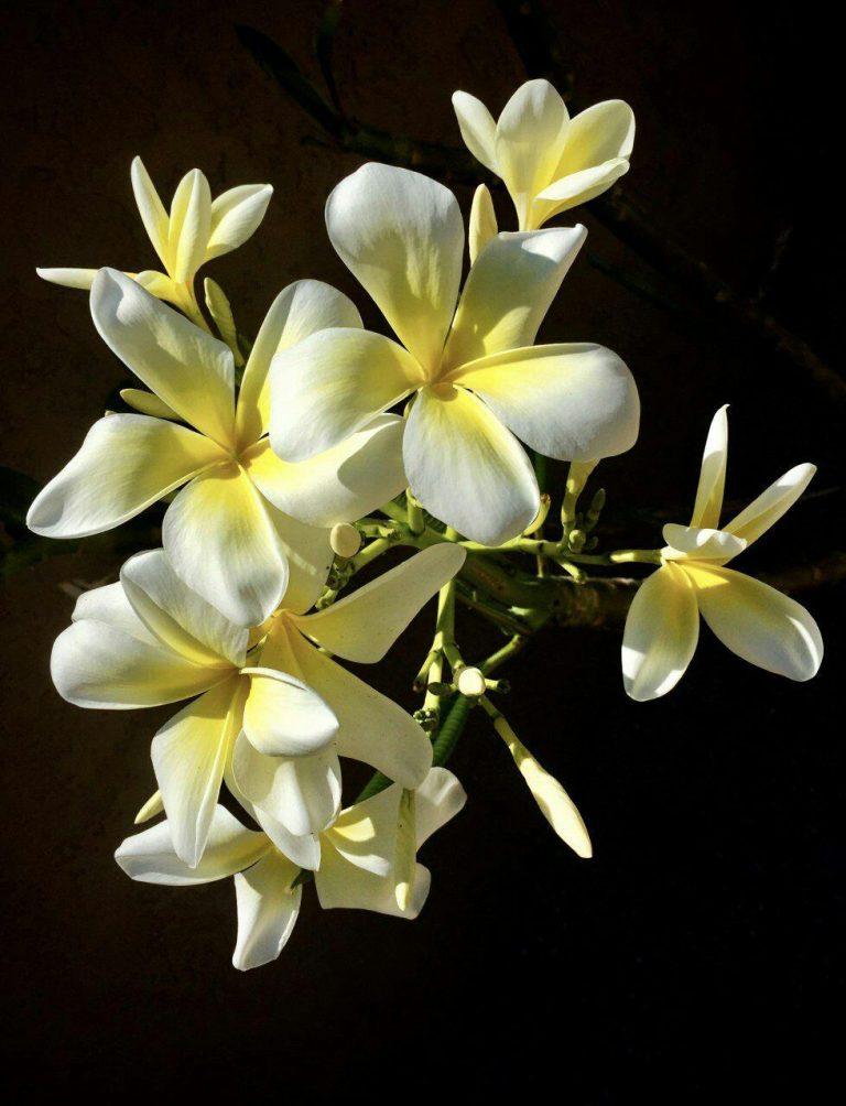 مدل نقاشی گل و گلدان گل مدل نقاشی گل و گلدان گل photo 2018 06 04 03 11 38 768x1004