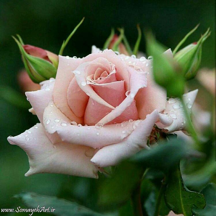 مدل نقاشی گل و گلدان گل مدل نقاشی گل و گلدان گل photo 2018 06 04 03 12 02