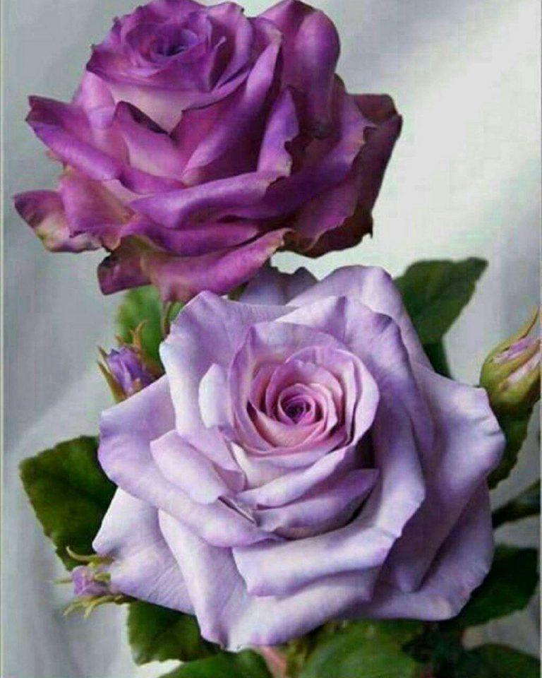 مدل نقاشی گل و گلدان گل مدل نقاشی گل و گلدان گل photo 2018 06 04 03 12 19 768x960