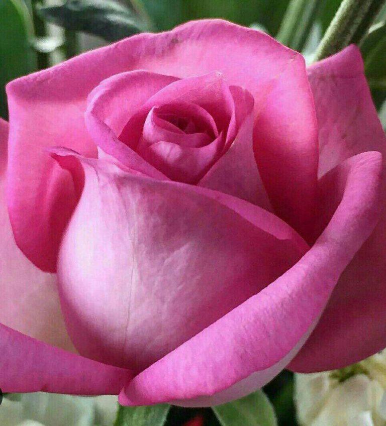 مدل نقاشی گل و گلدان گل مدل نقاشی گل و گلدان گل photo 2018 06 04 03 12 31 768x848