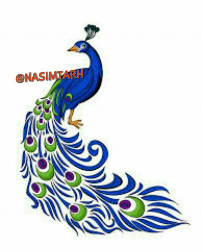 طرح های خام طاووس طرح های خام طاووس برای نقاشی photo 2018 06 07 04 25 26 768x958