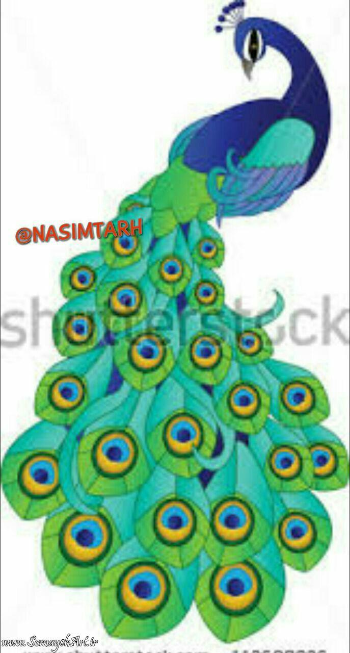 طرح های خام طاووس طرح های خام طاووس برای نقاشی photo 2018 06 07 04 25 28