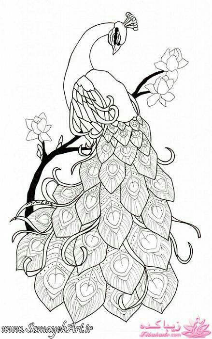 طرح های خام طاووس طرح های خام طاووس برای نقاشی photo 2018 06 07 04 25 29