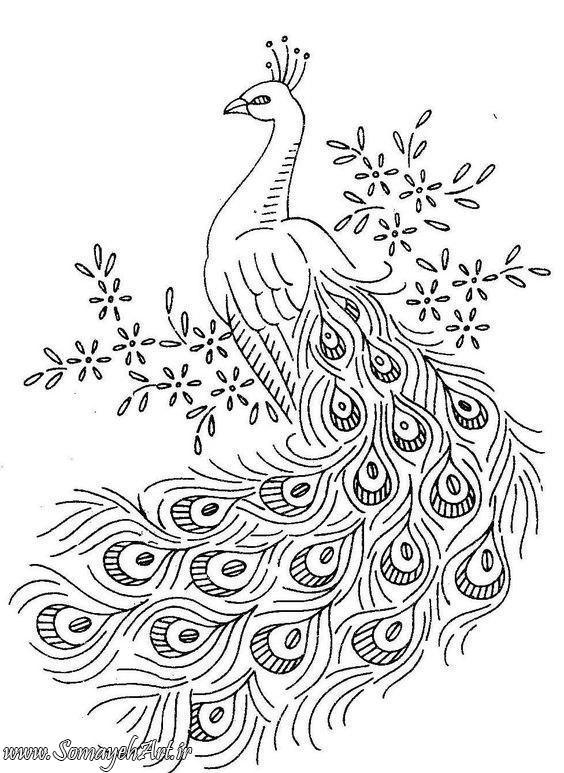 طرح های خام طاووس طرح های خام طاووس برای نقاشی photo 2018 06 07 04 25 34