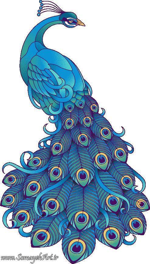 طرح های خام طاووس طرح های خام طاووس برای نقاشی photo 2018 06 07 04 25 35