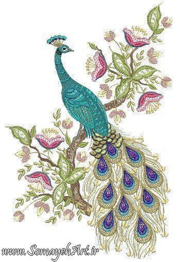 طرح های خام طاووس طرح های خام طاووس برای نقاشی photo 2018 06 07 04 25 36 2