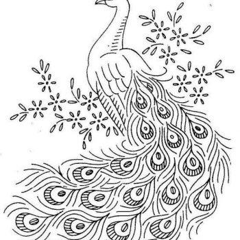 طرح خام طاووس طرح های خام طاووس طرح های خام طاووس برای نقاشی photo 2018 06 07 04 25 38 2 350x350