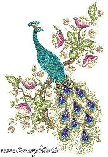 طرح های خام طاووس طرح های خام طاووس برای نقاشی photo 2018 06 07 04 25 39