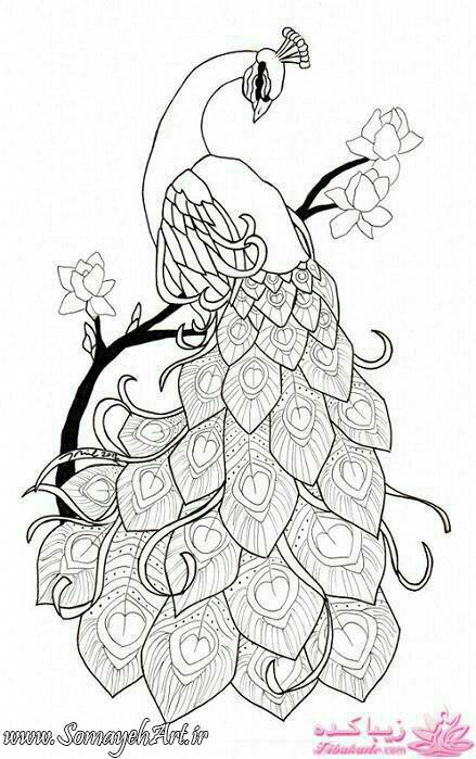 طرح های خام طاووس طرح های خام طاووس برای نقاشی photo 2018 06 07 04 25 40
