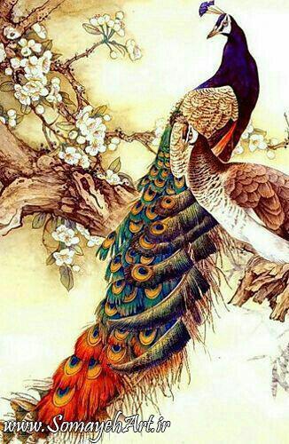 طرح های خام طاووس طرح های خام طاووس برای نقاشی photo 2018 06 07 04 25 42 2