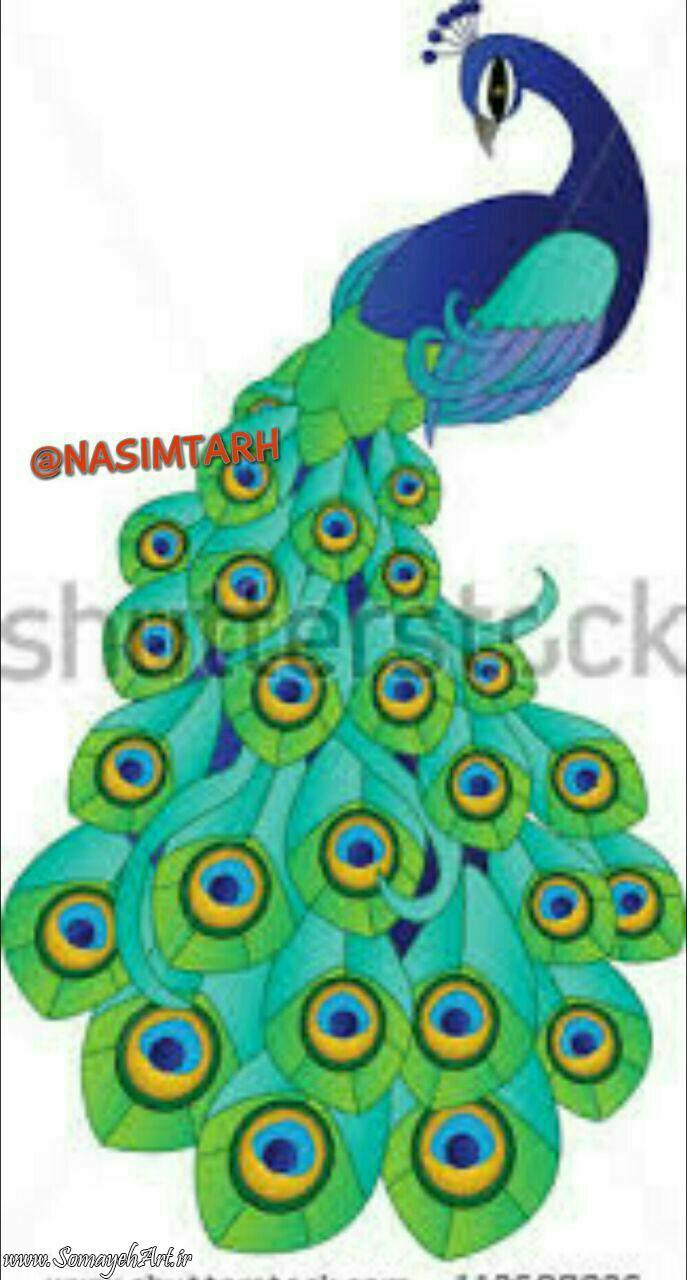 طرح های خام طاووس طرح های خام طاووس برای نقاشی photo 2018 06 07 04 25 45