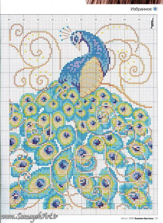 طرح های خام طاووس طرح های خام طاووس برای نقاشی photo 2018 06 07 04 25 50