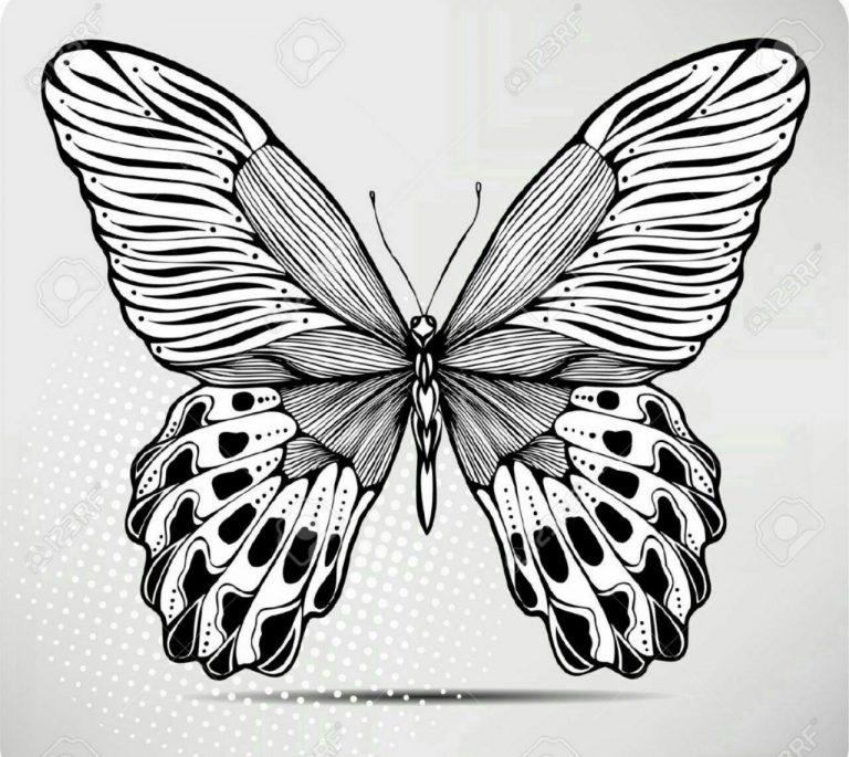 طرح پروانه برای نقاشی طرح پروانه برای نقاشی photo 2018 06 11 00 58 20 768x685