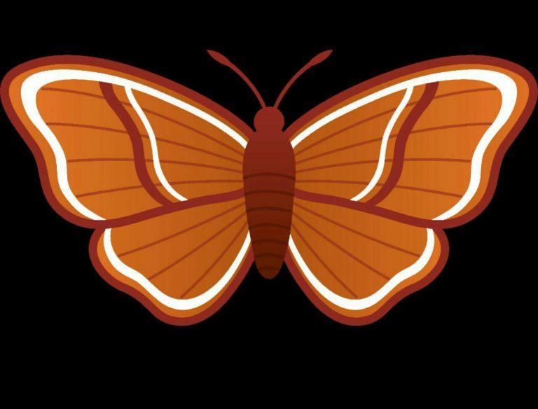 طرح پروانه برای نقاشی طرح پروانه برای نقاشی photo 2018 06 11 00 58 39 768x584