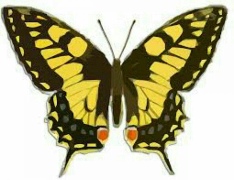 طرح پروانه برای نقاشی طرح پروانه برای نقاشی photo 2018 06 11 00 59 15 768x591