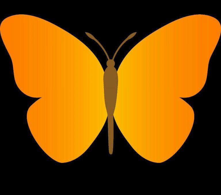 طرح پروانه برای نقاشی طرح پروانه برای نقاشی photo 2018 06 11 00 59 16 2 768x678