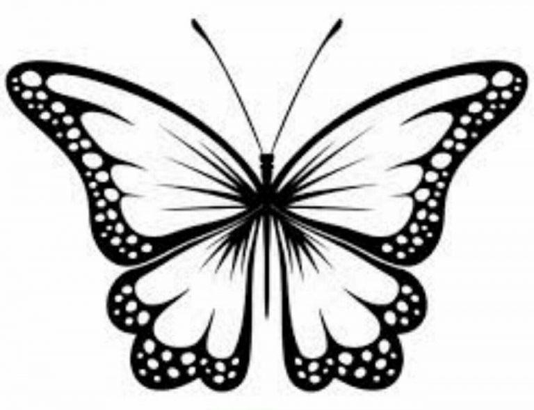 طرح پروانه برای نقاشی طرح پروانه برای نقاشی photo 2018 06 11 00 59 16 768x589