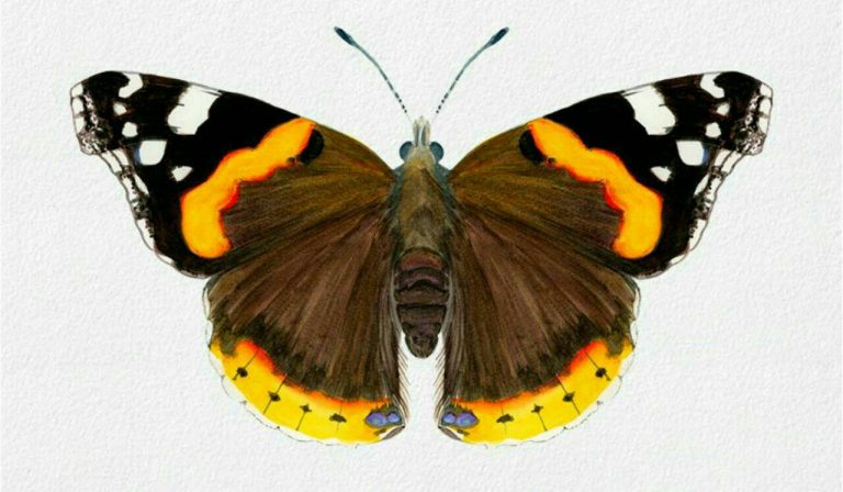 طرح پروانه برای نقاشی طرح پروانه برای نقاشی photo 2018 06 11 00 59 20 2 768x448