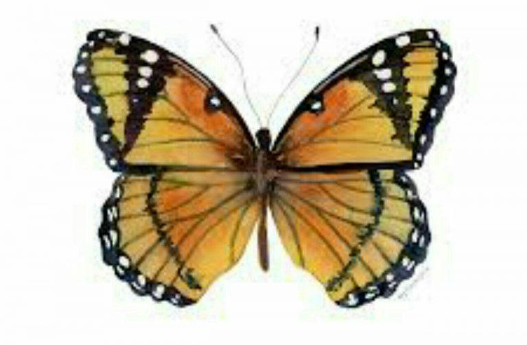 طرح پروانه برای نقاشی طرح پروانه برای نقاشی photo 2018 06 11 00 59 21 768x503