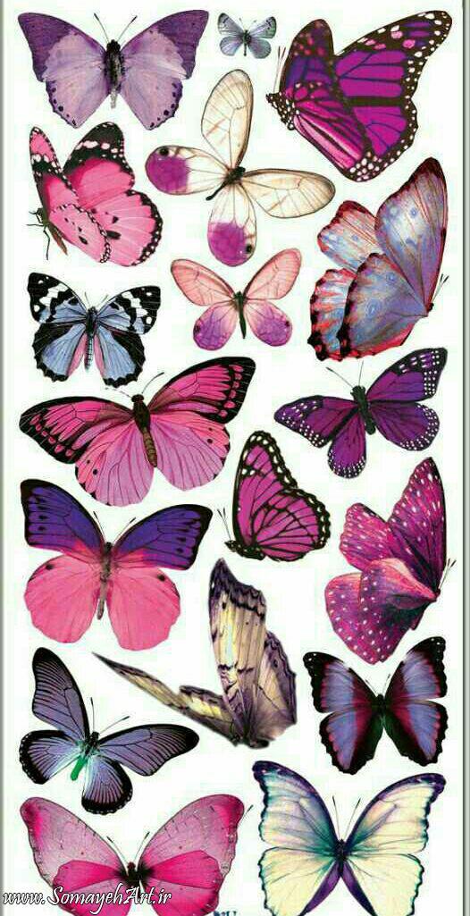 طرح پروانه برای نقاشی طرح پروانه برای نقاشی photo 2018 06 11 00 59 25 2