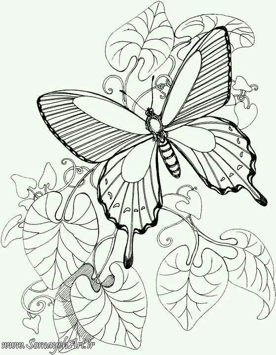طرح پروانه برای نقاشی طرح پروانه برای نقاشی photo 2018 06 11 00 59 32
