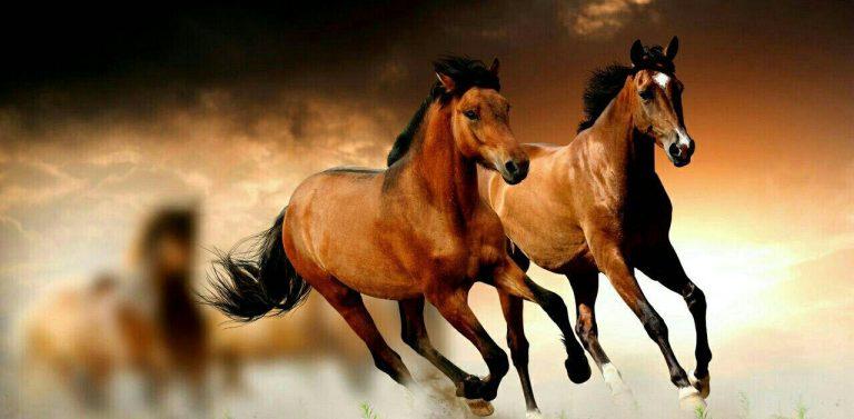 مدل نقاشی اسب سری 2 مدل نقاشی اسب سری 2 photo 2018 06 27 11 37 14 768x377
