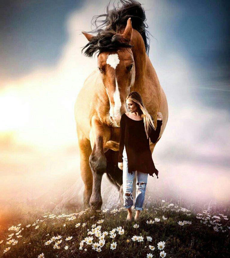 مدل نقاشی اسب سری 2 مدل نقاشی اسب سری 2 photo 2018 06 27 11 37 16 768x861