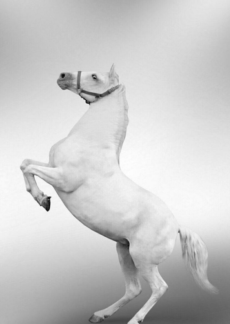 مدل نقاشی اسب سری 2 مدل نقاشی اسب سری 2 photo 2018 06 27 11 37 18 768x1081