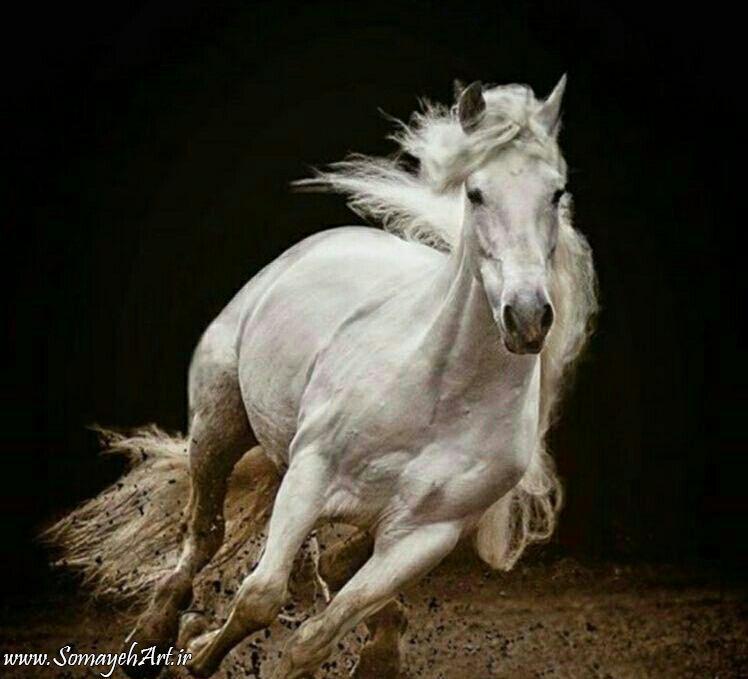 مدل نقاشی اسب سری 2 مدل نقاشی اسب سری 2 photo 2018 06 27 11 37 19 2