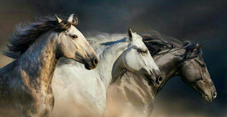 مدل نقاشی اسب سری 2 مدل نقاشی اسب سری 2 photo 2018 06 27 11 37 19 768x396